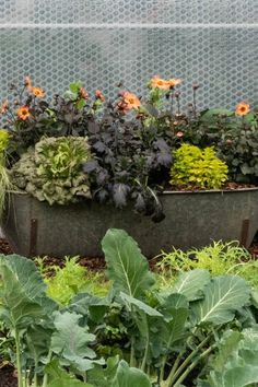 How to grow your own vegetables and avoid beginner mistakes! Fast Growing Vegetables, Planting Vegetables, Veggies, Back Gardens, Small Gardens, Mulberry Bush, Planting Potatoes, Veg Patch, Easy Care Plants