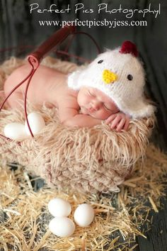 little chicken..omg cutest newborn photo ever i HAVE to try this!