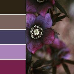 Love these deep jewel toned colors!!