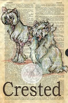 Chinese Crested Dog Commissions are a tricky venture and not my favorite thing to do. I am always anxious about pleasing the custome. Book Page Art, Art Pages, Collage, Chinese Crested Dog, Dictionary Art, Shoe Art, Vintage Ephemera, Altered Books, Art Studios