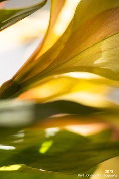 3873 http://www.kurtjohnsonphotography.com/