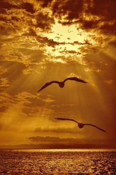 """maya47000: """" De deux choses lune . L'autre, c'est le soleil . Jacques Prévert """""""