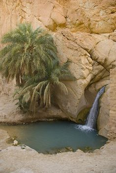 Oasis in the desert Desert Oasis, Desert Life, Beautiful World, Beautiful Places, Deserts Of The World, Amazing Nature, Beautiful Landscapes, Wonders Of The World, Mother Nature