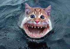 Scary  Catfish!