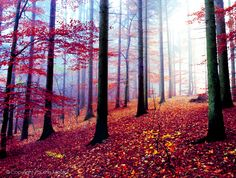 art, autumn, colorful, day, fall