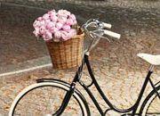 BASIL - Assortment dog bike basket this site!