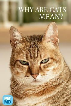 A lot of people think that cats are inherently mean-spirited or vindictive... but is that true?
