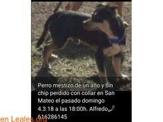 Perros perdidos  España  Las Palmas - Gran Canaria  Las Palmas G.C. March 08 2018 at 03:36AM   Mestizo perdido  #PERDIDO #ENCONTRADO  Contacto y Info: https://leales.org/perdidos-o-encontrados/perros-perdidos/mestizo-perdido_i3650 #Difunde en #LealesOrg un #adopta y sé #acogida para #AdoptaNoCompres O un #SeBusca de #perro o #gatos ℹ Perro mestizo de un año y sin chip perdido en San Mateo Gran Canaria. El 4/03/2018. Alfredo 616286145   Acerca de esta publicación:  Esta publicación NO ha sido…