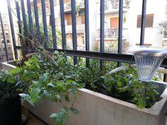 Photo entry for my vegetable garden. #unfaozhcgarden ©Gauri Salokhe