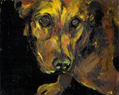 goldy: shelter dog project