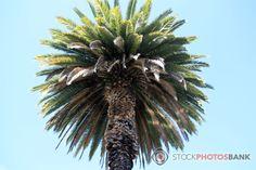 Stockphotosbank: Palm tree Palm Trees, Plants, Photos, Free, Palm Plants, Pictures, Plant, Planting, Planets