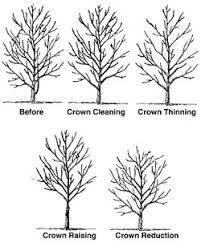 Trees Are Good - Tree Care Information Thinning trees Woodstock Georgia, Tree Diagram, Tree Id, Tree Structure, Tree Pruning, Tree Care, Day Work, Good Things