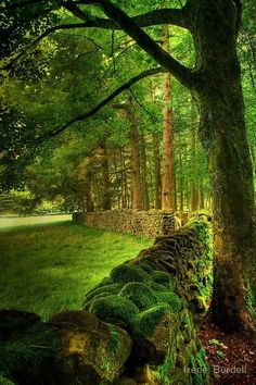 Amazing World: Ancient Stone Fence, Lancashire, England By Irene Burdell