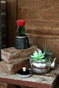 succulent plants in thrift store teapots for plant containers Container Flowers, Container Plants, Container Gardening, Plant Containers, Faux Succulents, Planting Succulents, Planting Flowers, Succulent Plants, Bird Bath Planter