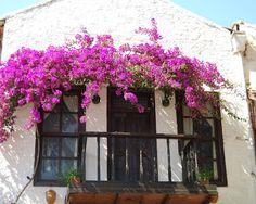 Beautiful balcony and flower arbor  Faith Hope and Cherrytea ~