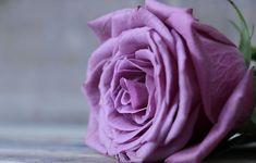 Ruže, Ušľachtilá Ruža, Rosenblum