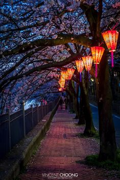 Photograph Follow The Light - Yokohama - Japan - by Vincent Choong