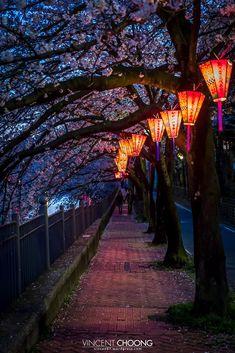Photograph Follow The Light - Yokohama - Japan - by Vincent Choong