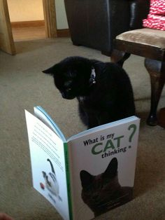 """What is my cat thinking?"" ""Quelle est la pensée de mon chat ?"" de Gwen Bailey"