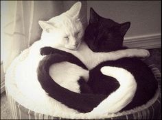 Black & White hug