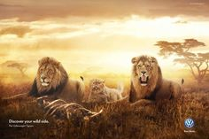 Volkswagen: Lions Discover your wild side. The Volkswagen Tiguan. Advertising Agency: DDB, Moscow, Russia Creative Director: Holger Paasch Photographer: Sergey Klyosov Digital artists: Nikita Stepanov, Sergey Klyosov, Sergey Brezhnev Photographer: Sergey Klyosov Published: April 2014