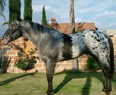 Rare colored horses! POST AWAY!! | Page 389 | My Horse Forum