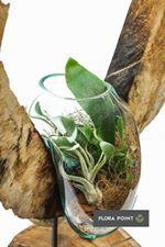 Terraria, Flora, Plants, Terrariums, Plant, Planets