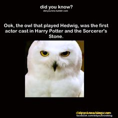 Did you know that the owl cast to play Hedwig's name was Ook?