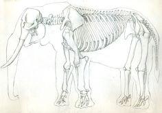 African Elephant Skeleton by UnamedKing on deviantART