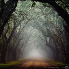 Pompo Bresciani: Photographer  This looks so much like the street in Savannah Georgia going into the Boy Scout property...just love love the trees and the fog in this shot!!!