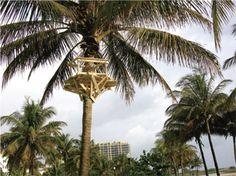Miami South Beach, Florida USA in Miami Beach, FL South Beach Florida, Florida Usa, Miami Beach, Study, Urban, Studying, Learning
