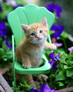 Sweet orange kitten