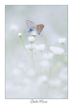 dreamy whites butterflies. Être sur un petit nuage by Minot Cécile, via Flickr