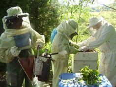 Materiais como fumigador,formão,pincel,etc. São fundamentais para manejar as caixas de abelhas
