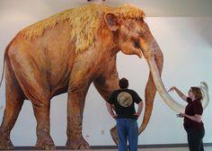 Columbian Mammoths were huge!