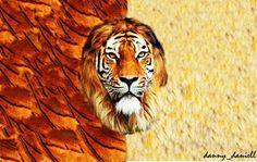 Lion + Tiger