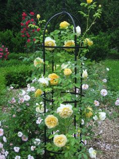 English Roses – A Visual Delight In The Garden | Hum Ideas