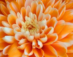 Love orange flowers