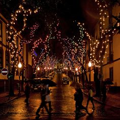 Madeira Island: Christmas Lights by Mr.Enjoy