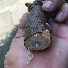plastic nano #geocache hidden in a piece of wood