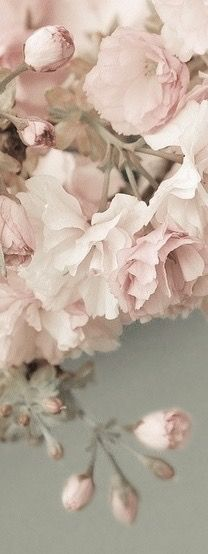 Possiveis paletas June 2014 wedding color- Help - The Knot Pretty In Pink, Beautiful Flowers, Perfect Pink, Simply Beautiful, Gorgeous Gorgeous, Romantic Flowers, Elegant Flowers, Absolutely Gorgeous, Spring Is Coming
