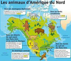 Les animaux d'Amérique du Nord French Kids, Les Continents, Reading Practice, French Phrases, French Language, Montessori, The Unit, Education, Arabesque