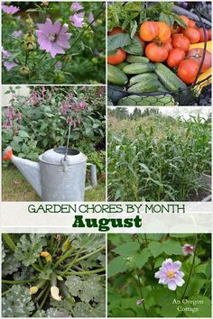 Get your yard & garden ready for fall with this gardening to-do list for August. It's harvest season for some, but these are great garden chores for EVERYONE who has a garden at their home!
