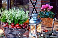Der goldene Oktober  macht seinem Namen in diesen Tagen wirklich alle Ehre. Wunderbares, warmes Wetter lockt derzeit nach draußen in den Ga...