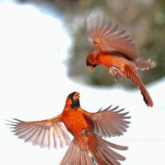 Photo by Edward Mistarka - Cardinal Combat