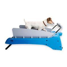 DogTread - Doggie Treadmill  Hello not waking up at 5 am….