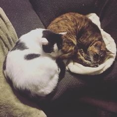 Looks like Simon and Mika have the right idea on this rainy #Monday! #petsitting #thewagpack #meow #cuties