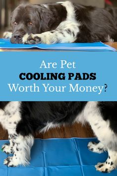 Are Pet Cooling Mats Worth Your Money? - Pet cooling pads or cooling mats, are a great way to keep your dog cool during the dog days of summer. They can also help with health conditions. Dog Training Bells, Best Dog Training, Big Dogs, Cute Dogs, Dogs And Puppies, Pet Cooling Pad, Outside Dogs, Cool Dog Houses, Best Dog Toys