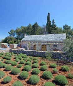 Croatian stone cottage with lavender garden.