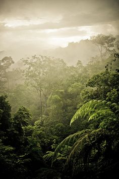 Selva tropical en Costa Rica.